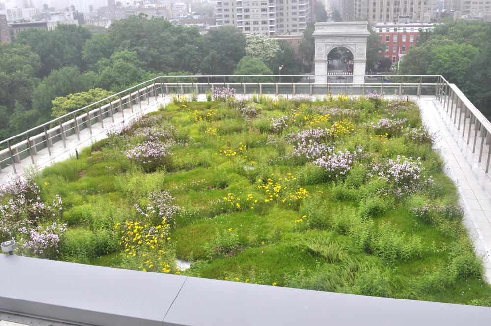 NYU Center for Spiritual Life Green Roof