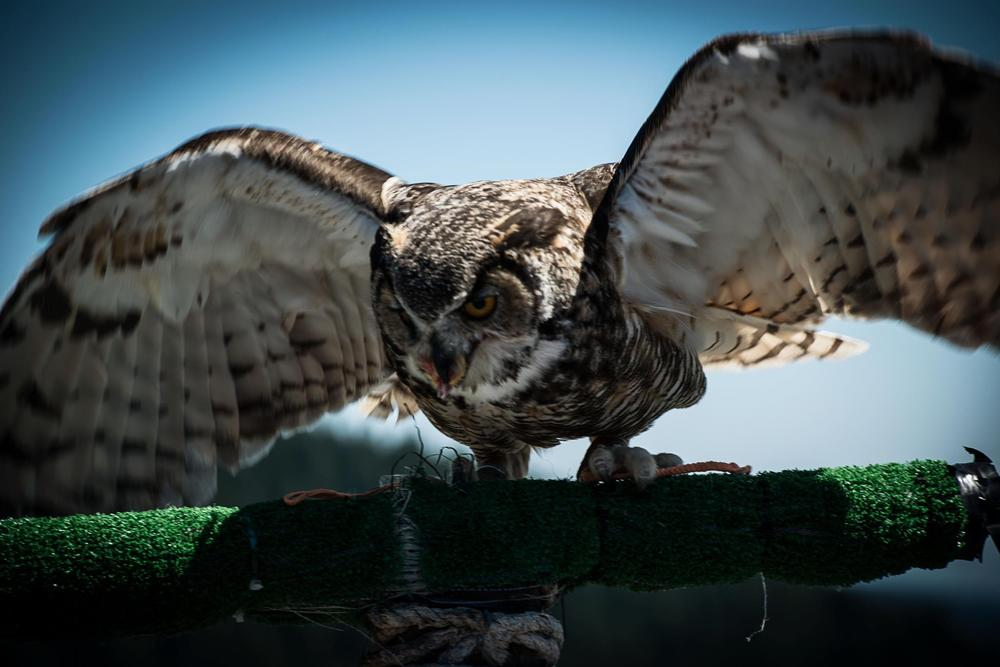 owl_by_craigls2012-d5j4lhx.jpg