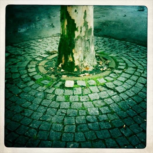 TreeCircle.jpg