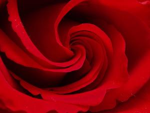 Roos.jpg
