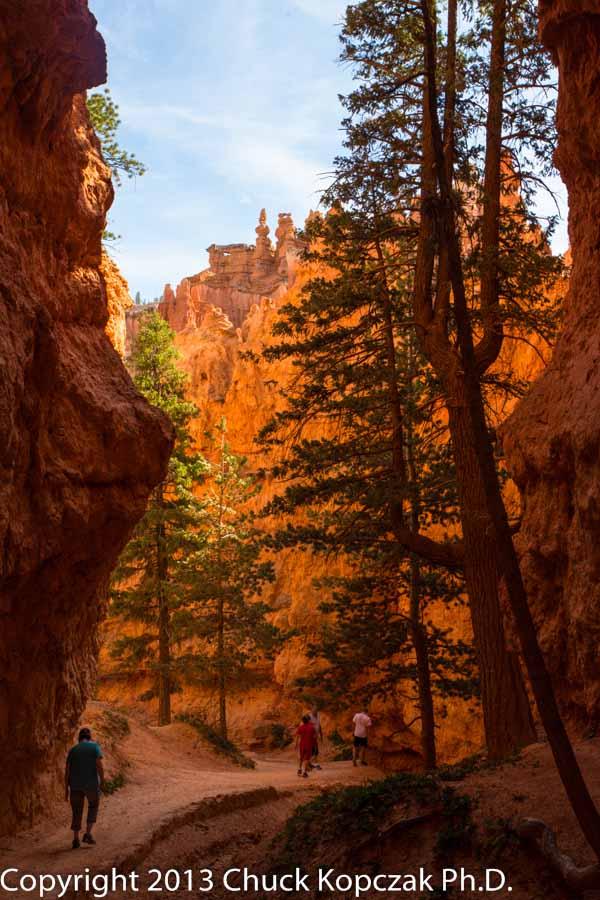 2013-07-09 Bryce Canyon Navajo Trail 03-900px.jpg