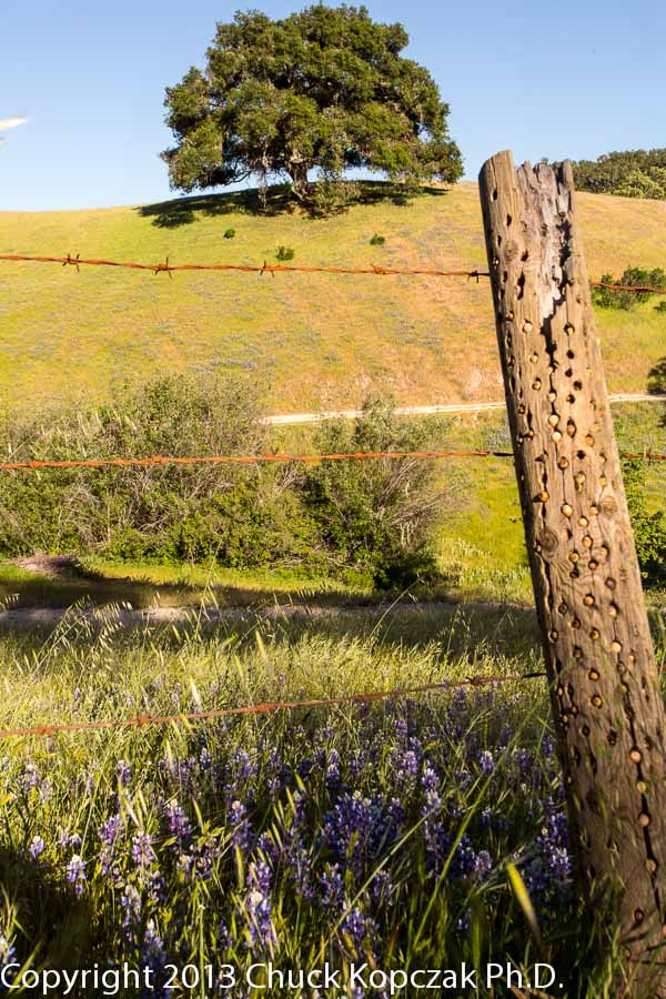 The late afternoon sun bathes a hillside pasture near Nipomo, California.