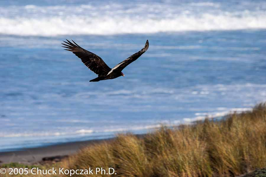 Soaring Over the Sand