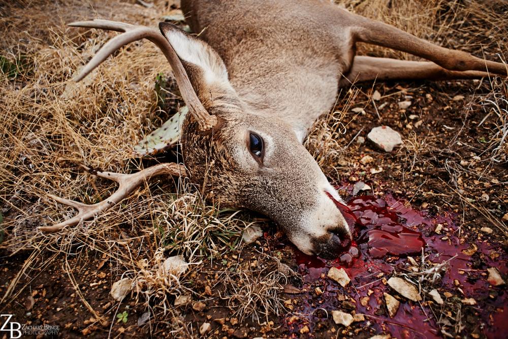 026_2013.12 Texas Christmas_351.jpg