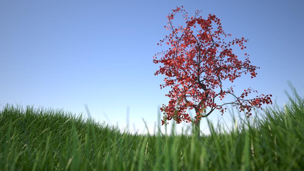 grass DOF red leaves on tree.jpg