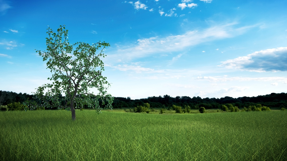 tree w tall grass composite.jpg