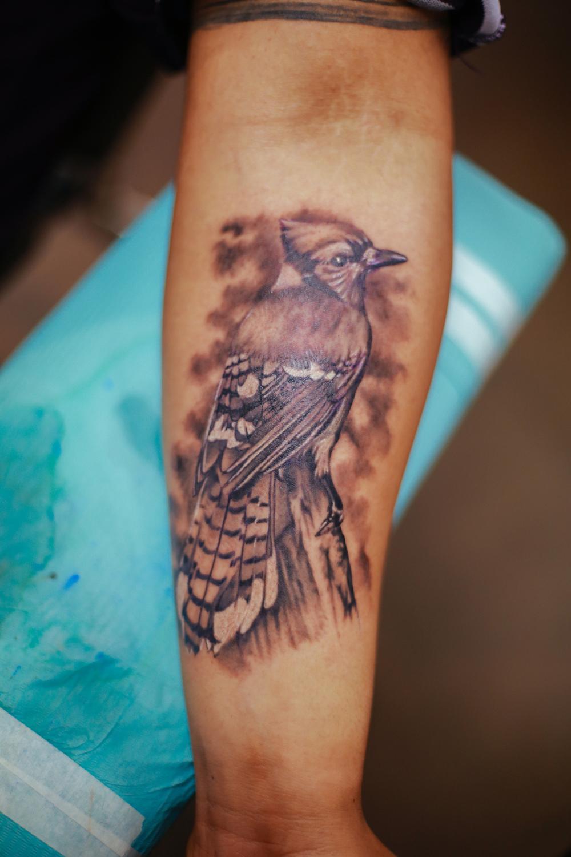 suno-park-tattoo-blue-jay-b&g.jpg