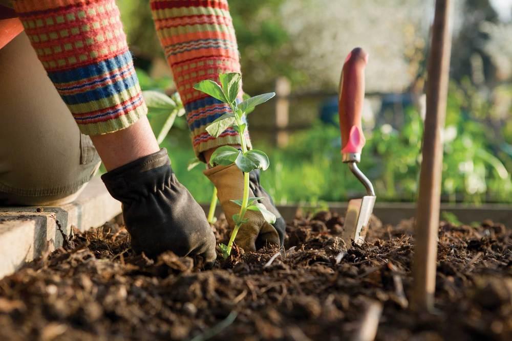 Hands-Gardening_i.jpg