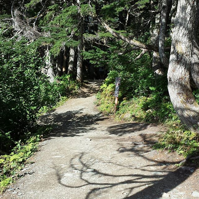 Beautiful path on the long, winding yarn road.... Mt Roberts hike. Juneau, AK.