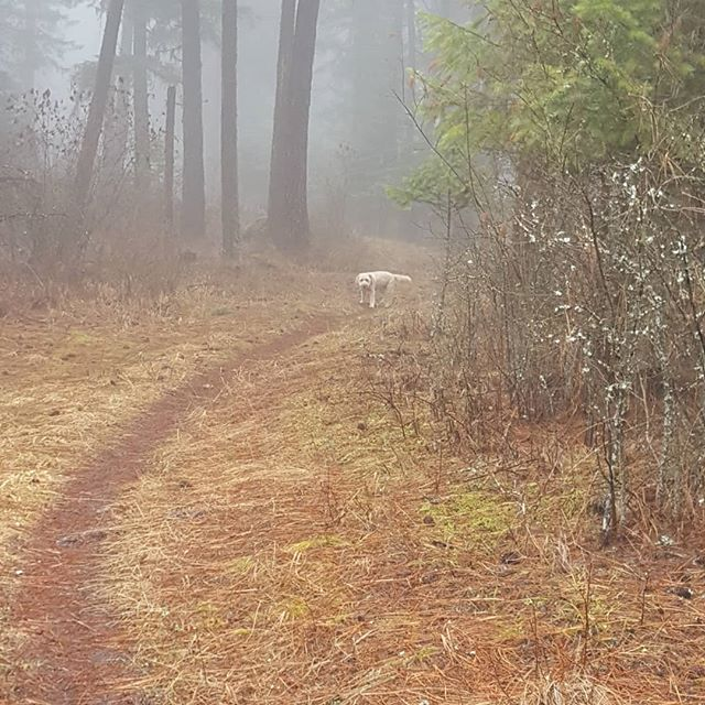 Misty afternoon hike.