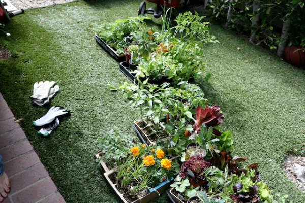 gardening plants.jpg