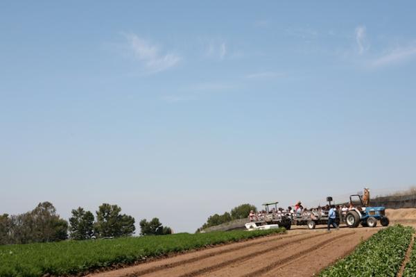 tanaka farms strawberry picking2.jpg