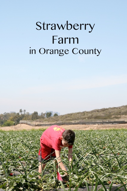 strawberry farm irvine.jpg