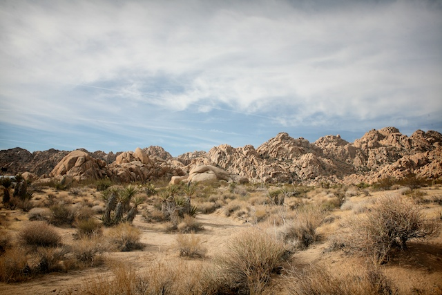 jumbo rock joshua tree.jpg