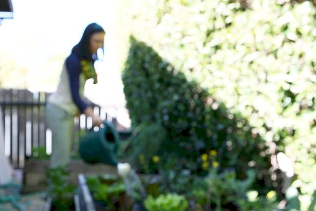 urban gardening.jpg