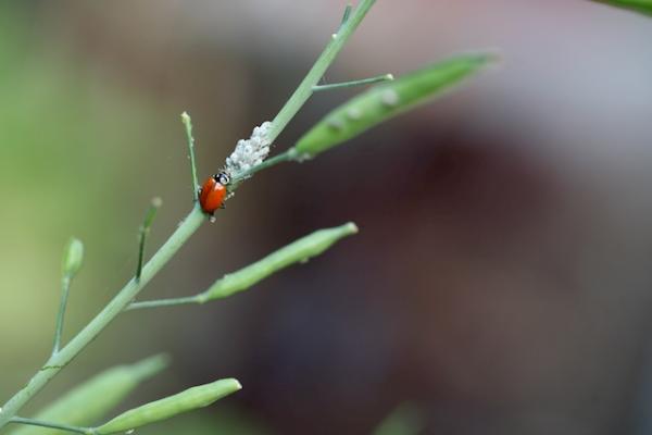 ladybug garden.jpg