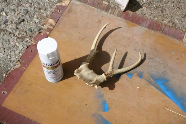 refinish antlers 3.jpg