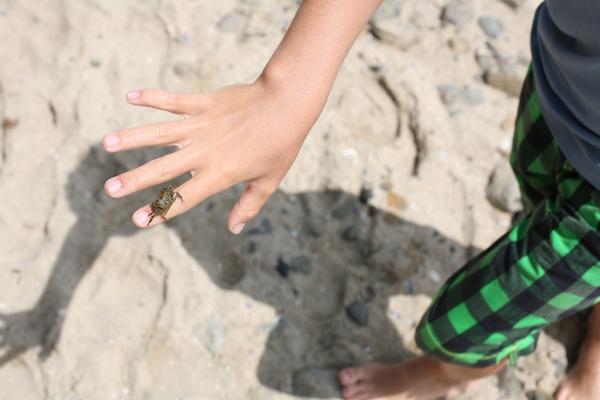 laguna beach crab.jpg