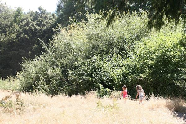 palomar camping 11.jpg
