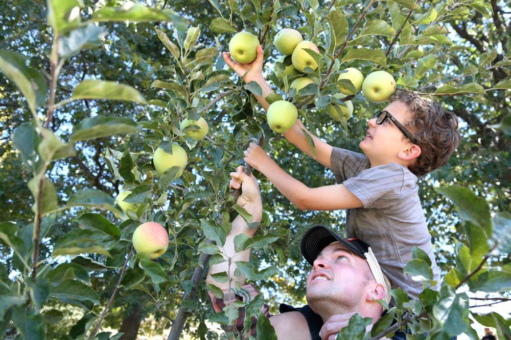 apple picking (1).jpg