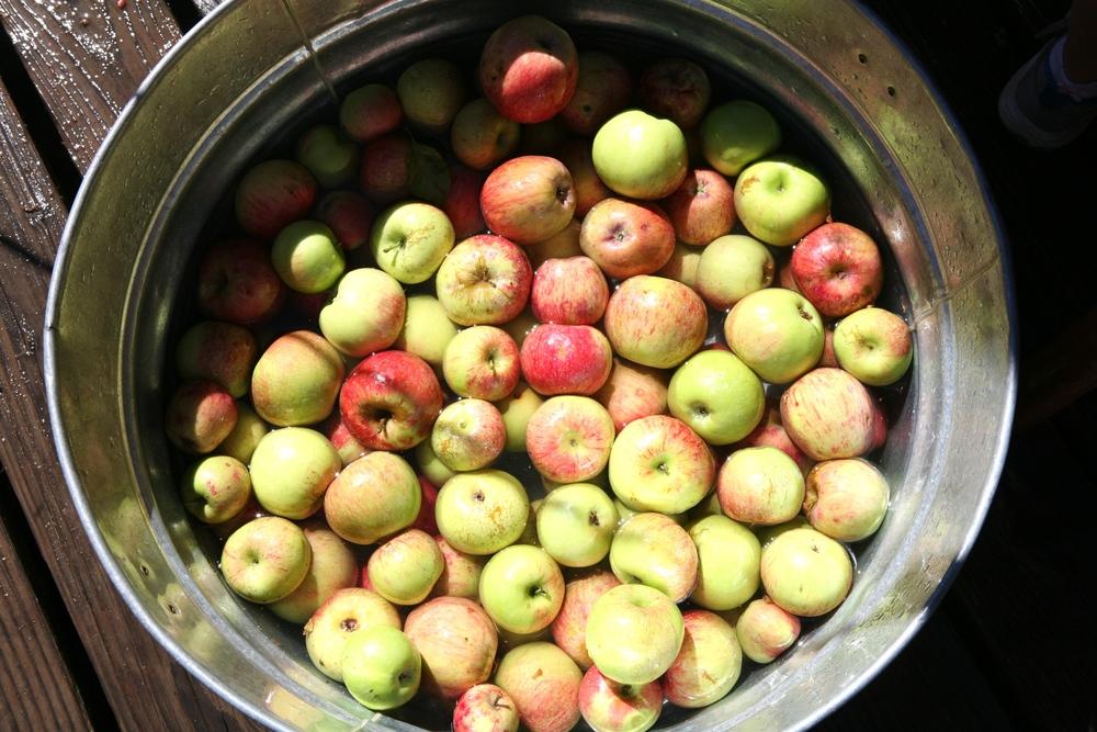rileys farm apple cider.jpg