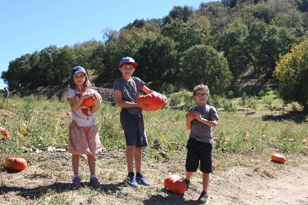 rileys farm pumpkins.jpg