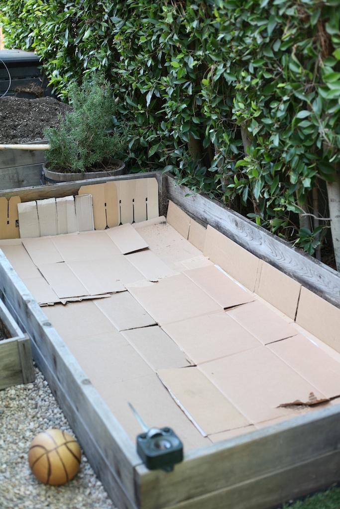 cardboard in garden bed.jpg