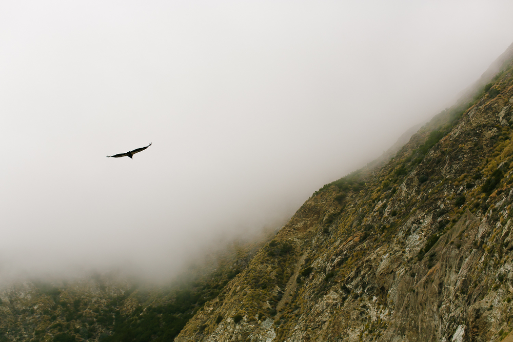 california condor, big sur