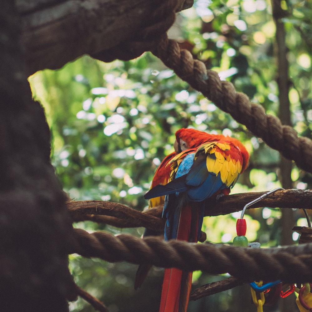 4_Color.jpg