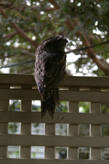 post_owl1