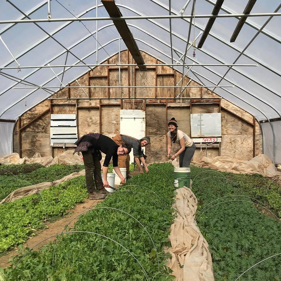 304 greenhouse.jpg