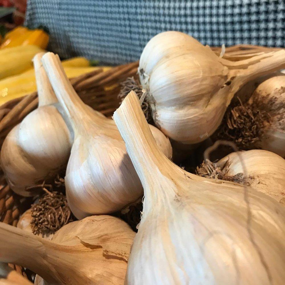 0916 garlic.jpg