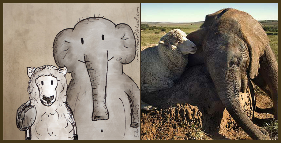 Unlikely animal best friends - elephant and sheep. The Land of Le Beef comic strip, by Darren Lebeuf