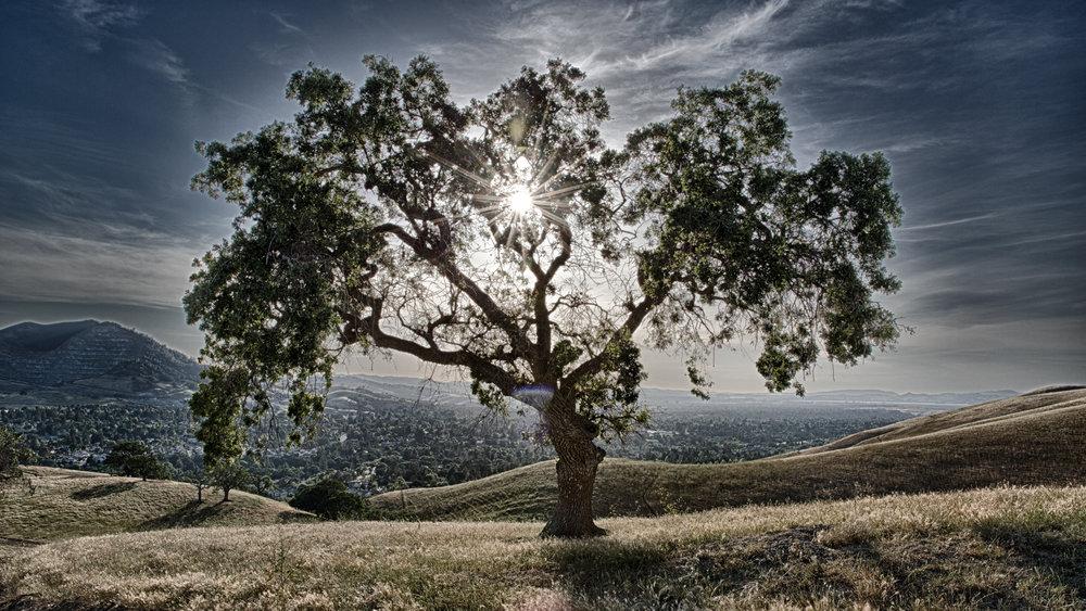 Clayton Oak.jpg