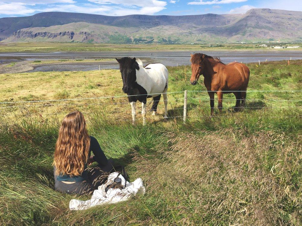 Icelandic horses near Esja