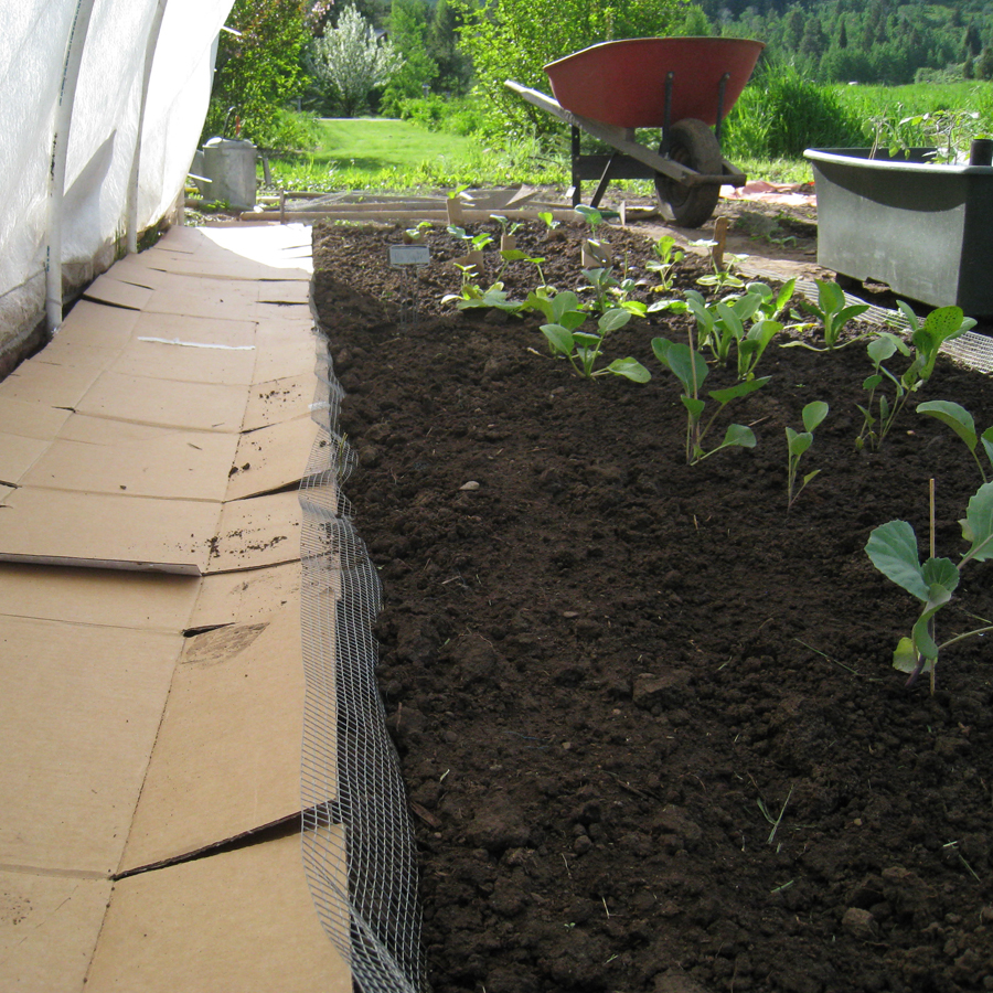 Old cardboard boxes can be used to keep weeds out of paths.