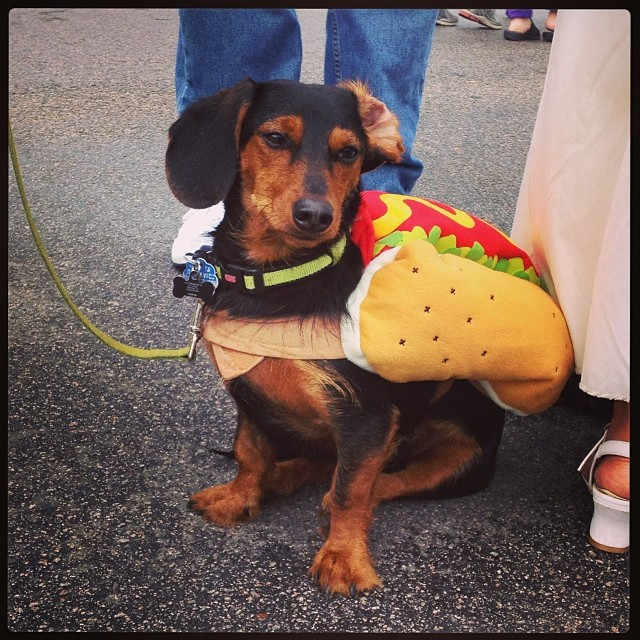 Humans weren't the only ones that got to dress up. This sad weiner dog got to be encased in a hotdog costume.  Naomi Wood  loved it enough to 'gram it.