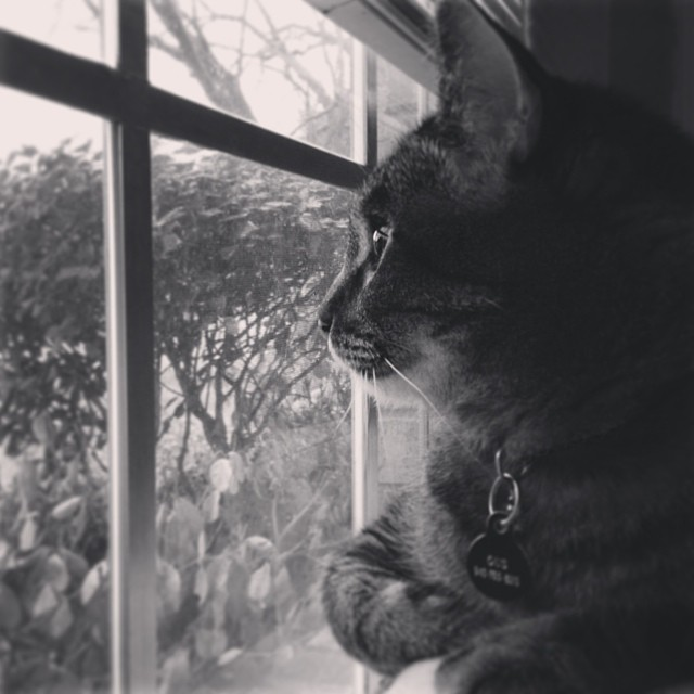 Cats like watching sleet, too. Photo by @txbhrtfld.