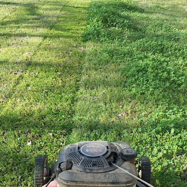 It was finally time to dust off and tune up that lawn mower. The grass is green and growing again, unfortunately. Photo by Todd Spigener.