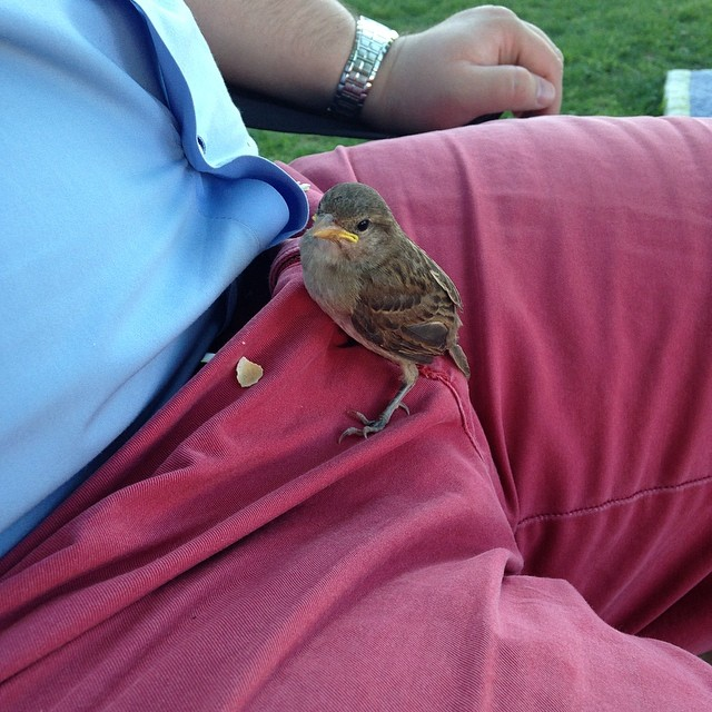 @michagb86 snapped a shot of this little fledgling who decided to hang out on a friend's crotch during a picnic on the square. The birds on the courthouse lawn have gotten a little too friendly.