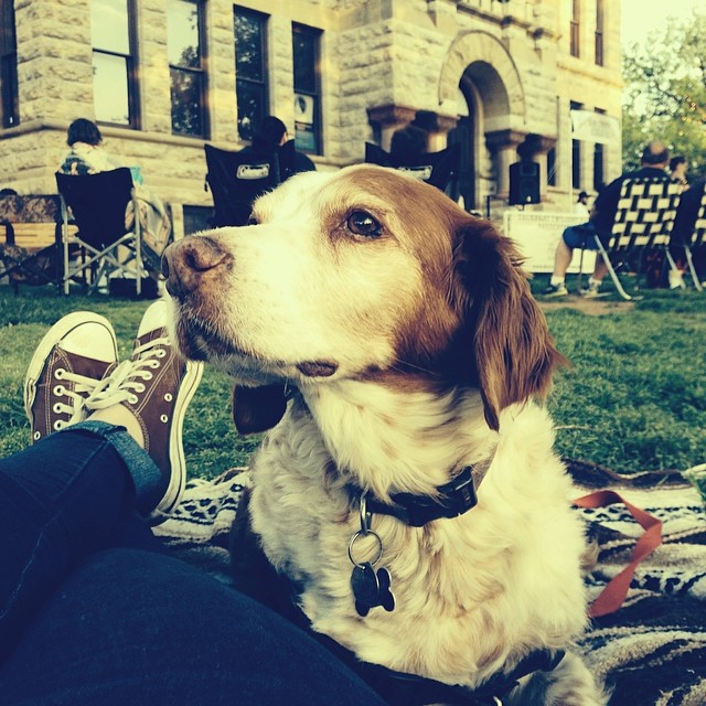 Damn that's a good-lookin' dog mug. @hkgregory did a little chilling on the courthouse lawn with her furry little friend.