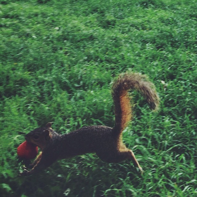 Squirrel! Photo by @evie_marie.
