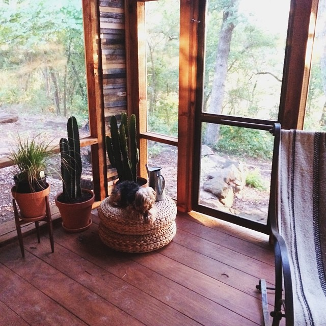 Even cacti love the polar vortex. Especially at the home of @pastranastudio.
