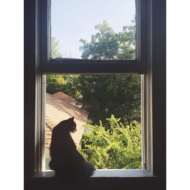 @taylorbunch_ even caught her cat enjoying the open windows and cool breezes. That, or evilly plotting. This does kinda look like an evil cat. Good luck with that, Mrs. bunch.
