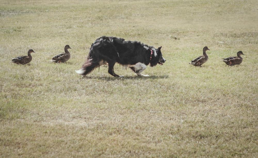 dog days 6.jpg