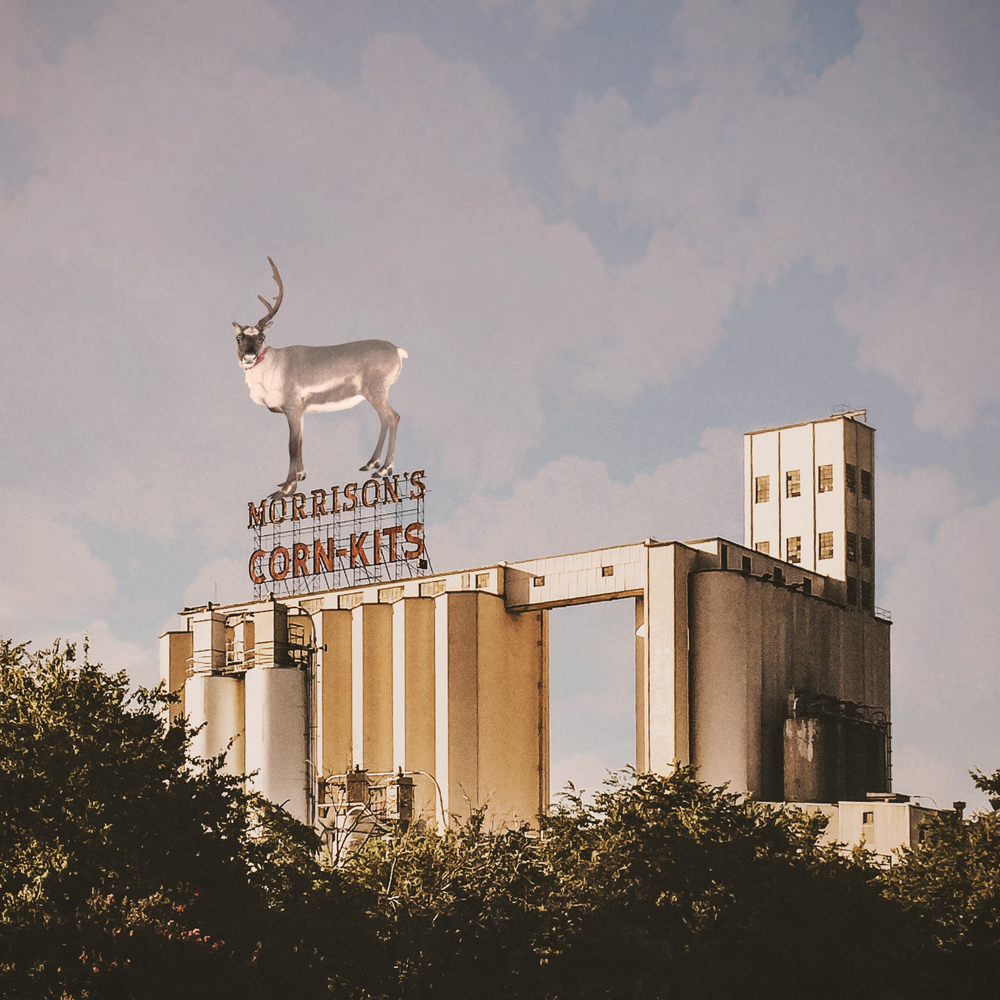There was a white deer (reindeer?) with one antler running around downtown this weekend. Did you catch a glimpse? Reader @Falcor sure did! He was on the scene when it was in some of the most iconic Denton locales!