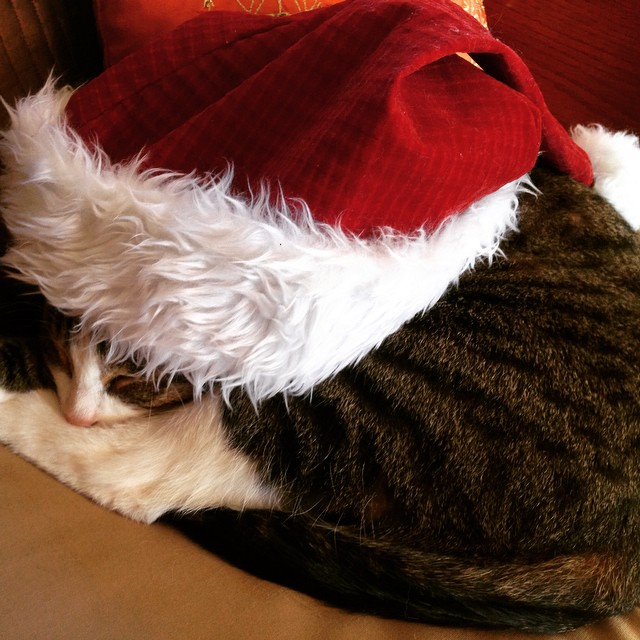 Santa cat takes your milk and cookies and leaves you with a feeling of worthlessness.
