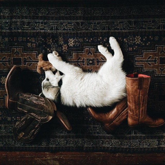 Boot scootin' puppy.