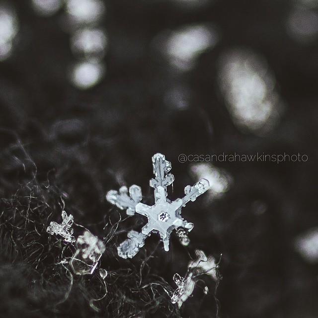 Macro snowflakes.