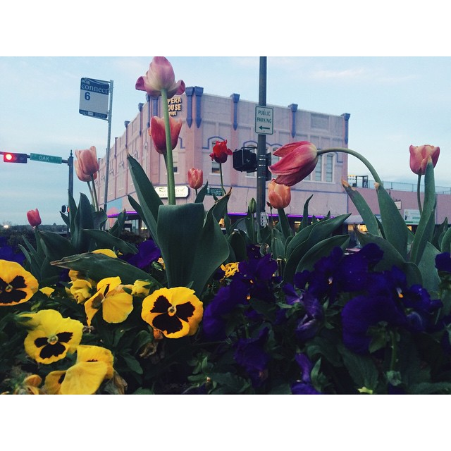 Y'all stopped to smell the flowers on the square lately? @ShainaSheaffPhoto has.